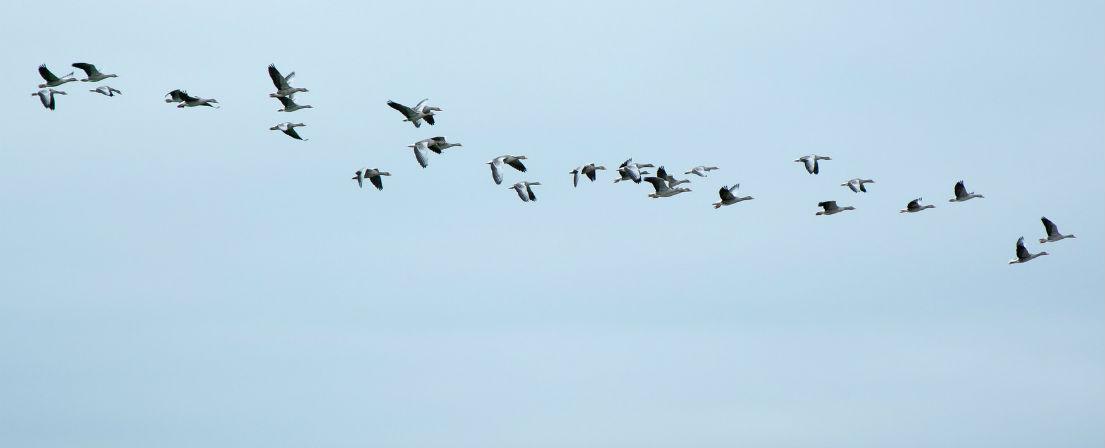 Ptáci2
