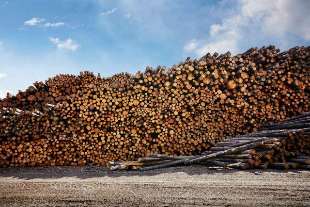 dřevo done