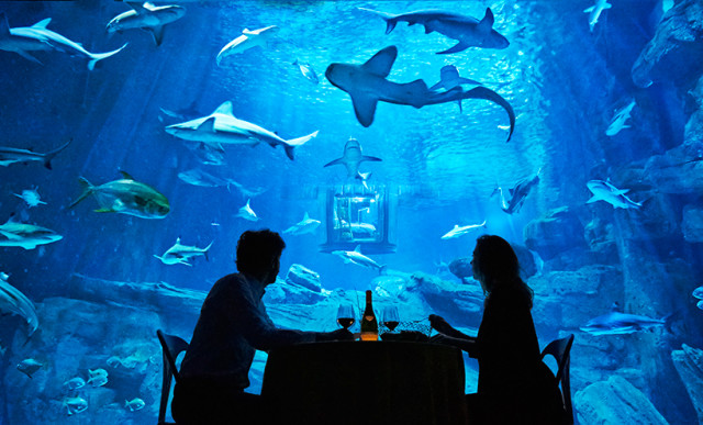 Airbnb-Shark-Aquarium-Paris-Meal