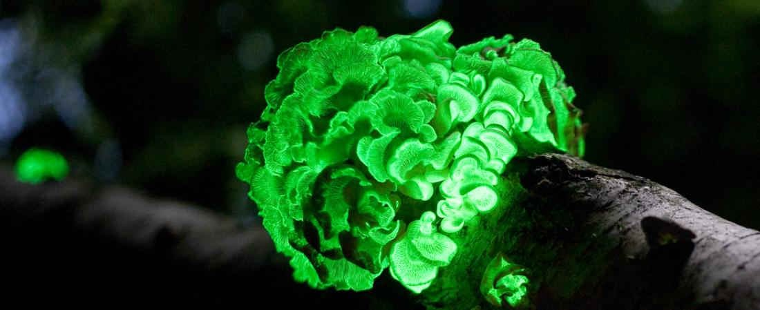 houba_fluorescent