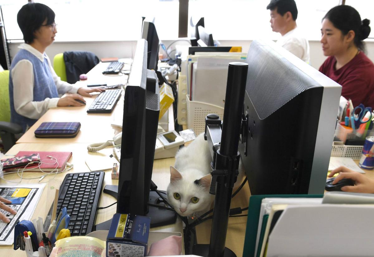 n-cats-feline