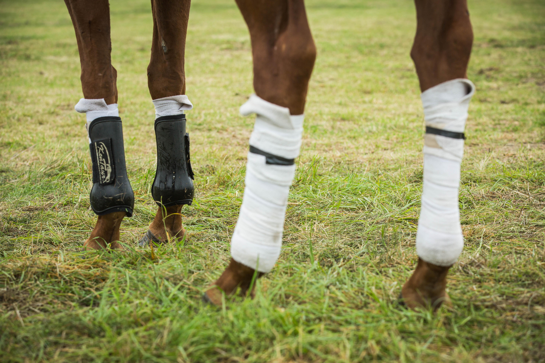 Koně mají chrániče nohou, aby nedošlo v soubojích či při prudkých střelách ke zranění.